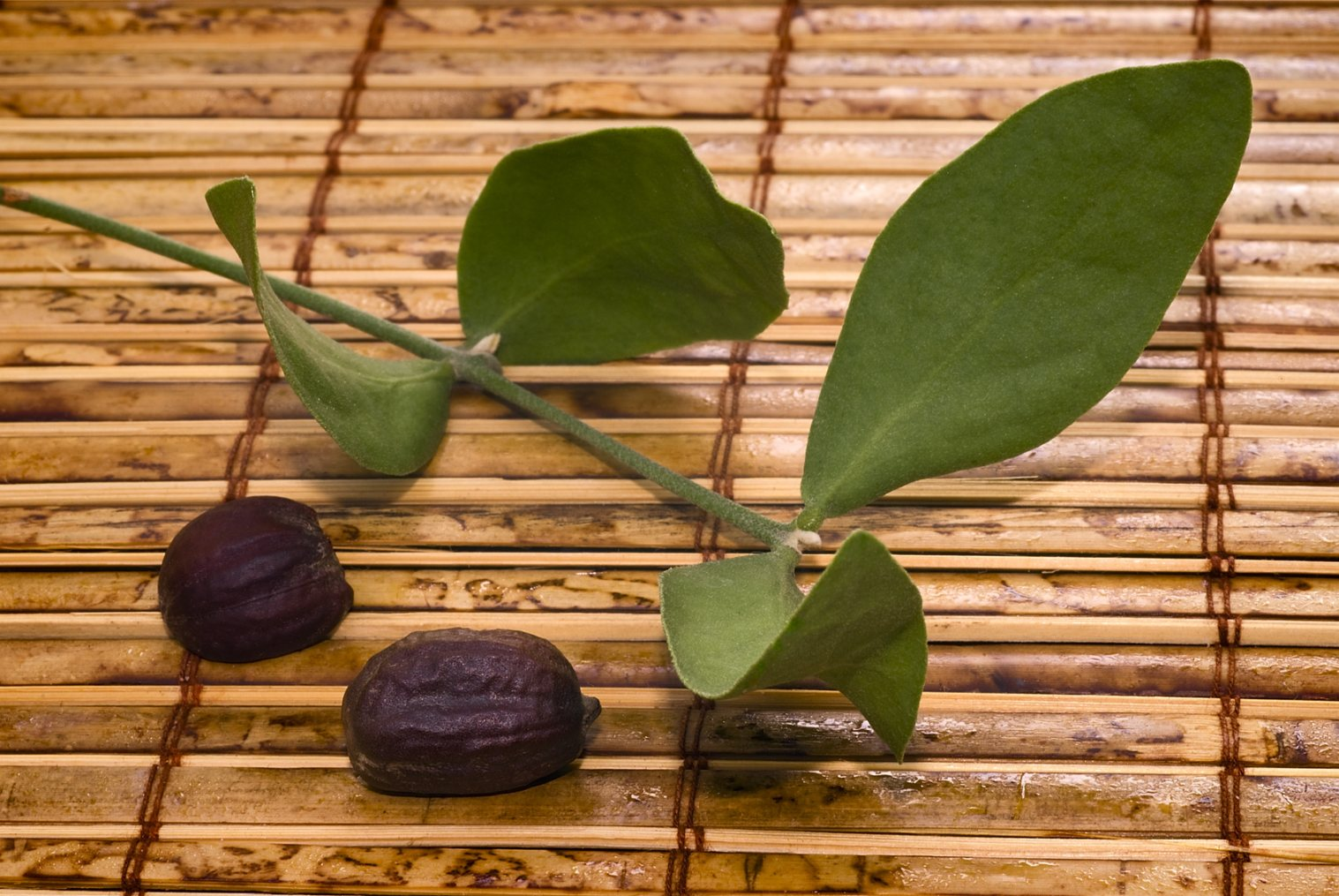 Olej jojoba - właściwości, zastosowanie